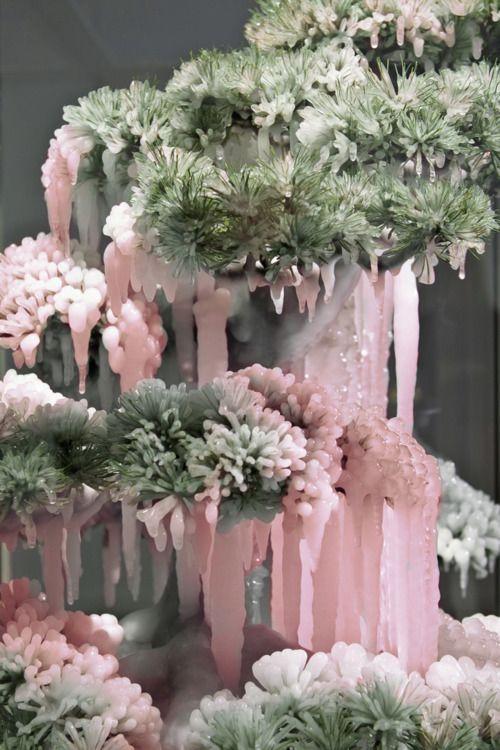 cây thạch anh hồng