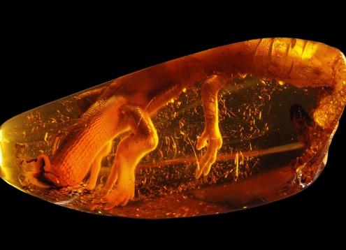 amber hổ phách