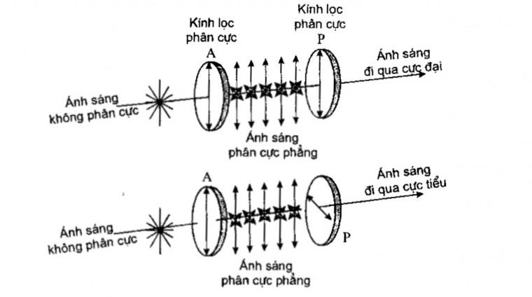 nguyên lý hoạt động của phân cực kế