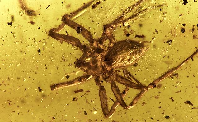 nhện trong hổ phách