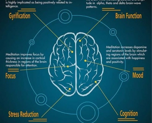 Sự thay đổi và phát triển của não bộ qua từng thời kỳ